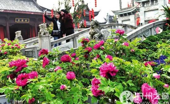 5293,游人观赏牡丹花(原创) - 春风化雨 - 诗人-春风化雨的博客